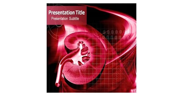 Amazon Com Kidney Powerpoint Template Kidney Powerpoint