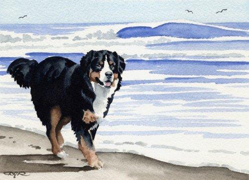 (Bernese Mountain Dog Dog Art Print by Artist DJ Rogers)