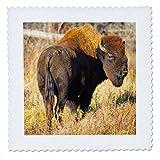 3dRose Danita Delimont - Bison - Wood Bison in northern British Columbia, Canada - 18x18 inch quilt square (qs_257464_7)