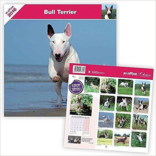 2009 Bull Terrier