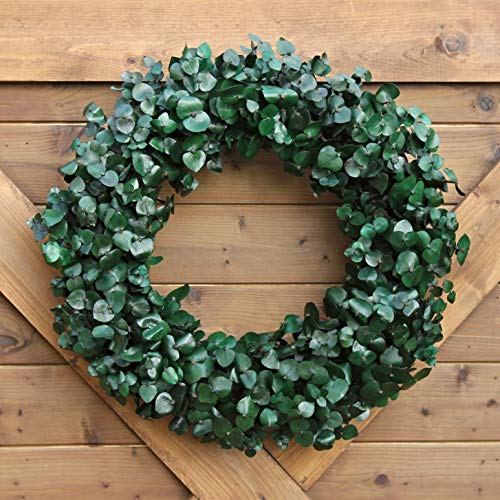 (Handmade Natural Eucalyptus Stem Wreath | Solid Color Home Accent | Preserved Washed Dried Eucalyptus)