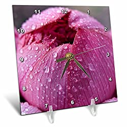 3dRose Danita Delimont - Flowers - Pink Lotus Blossom Bud with Rain Macro Hong Kong Flower Market - 6x6 Desk Clock (dc_257142_1)