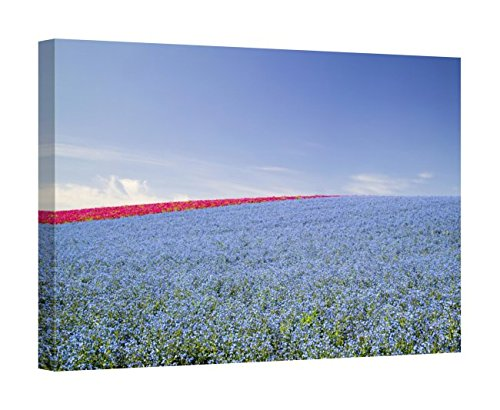 Flax Terry - Easy Art Prints Terry Eggers's 'Crop of Flax On Hillside in Rows' Premium Canvas Art 24 x 36