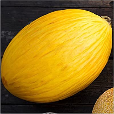 Package of 100 Seeds, Canary Melon (Cucumis melo) Non-GMO Seeds by Seed Needs