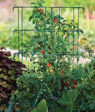 Burpee Extra Large Heavy Gauge Tomato Cage 3 Extenders | 18