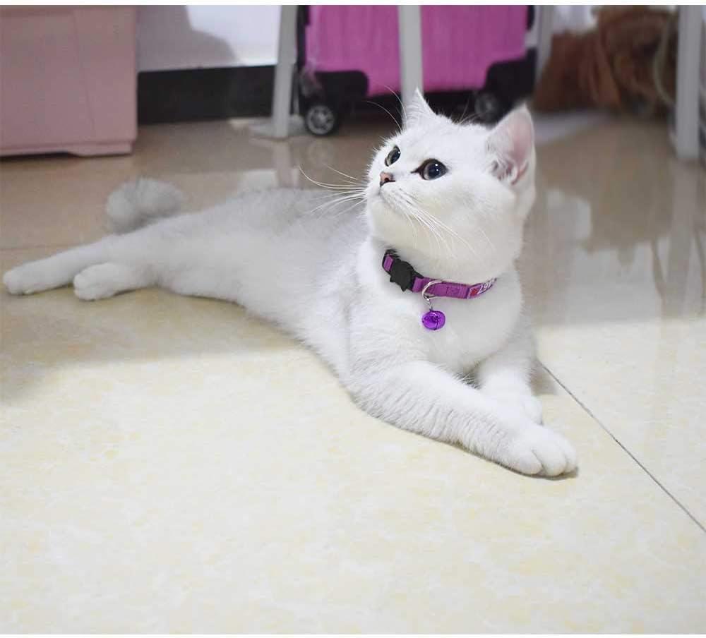 Mejor manera de presentarle a tu gato un gato nuevo - Best Way to Introduce Cats to Each Other