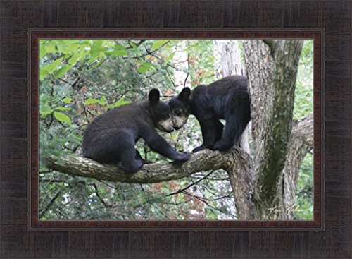 Best Friends by Kim Norlien 17x23 Two Black Bear Cubs On Tree Branch Heads Together Framed Art Print Picture (Tree Branch Framed)