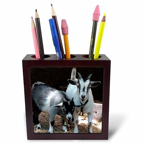 Goat Tile - 3dRose ph_1068_1 Pygmy Goat Tile Pen Holder, 5-Inch