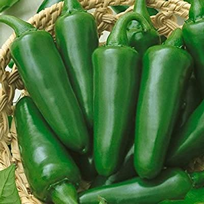 Tam Jalapeno Hot Pepper Garden Seeds - Non-GMO, Heirloom Vegetable Gardening Seed