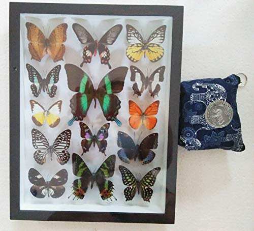 3D Luxury Rare Real 14 Mix Beautiful Butterfly in Frame Set Insect Insects Box Display Taxidermy Framed Collectible Entomology Home Decor Gift Handmade Bug Bugs Glass Wood Wooden Common Blue Bottle