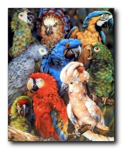 Parrots Wall Decor Collage Tropical Birds Animal Art Print Poster (16x20)