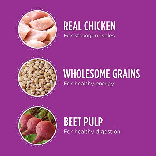 IAMS Proactive Health Mature Adult Dry Dog Food
