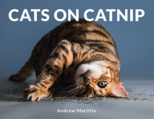 Andrews Photo - Cats on Catnip