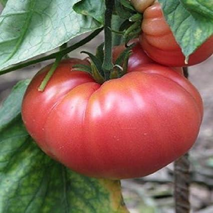 German Giant Heirloom Tomato Seed