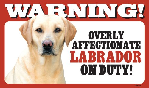 - Warning Overly Affectionate Labrador Retriever (Yellow) On Duty