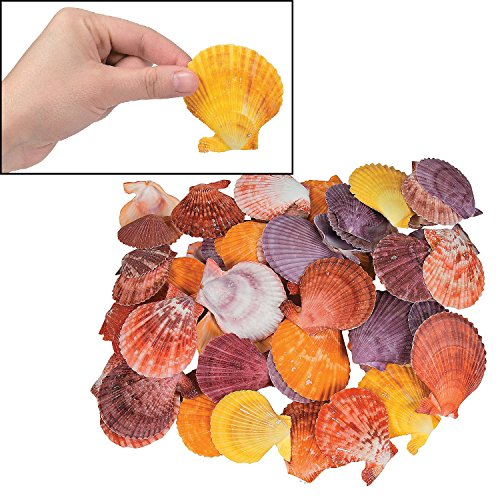 Dyed Pecten Nobilis Sea Shells (Approx. 120 Pieces) 1 1/2