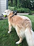 READYACTION Sport with Dog Harness