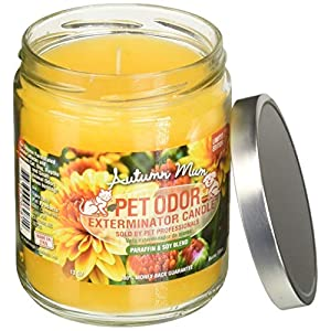 Specialty Pet Products Amber Patchouli Pet Odor Exterminator 13 Ounce Jar Candle (Amber Patchouli, 1) 1