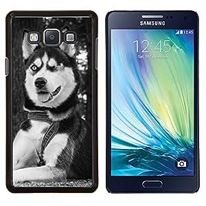 TECHCASE---Cubierta de la caja de protección para la piel dura ** Samsung Galaxy A7 ( A7000 ) ** --Husky siberiano de Alaska Malamute de Ojos