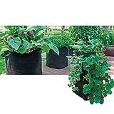 Strawberry Pyramid Grow Tub (3.5 gal)