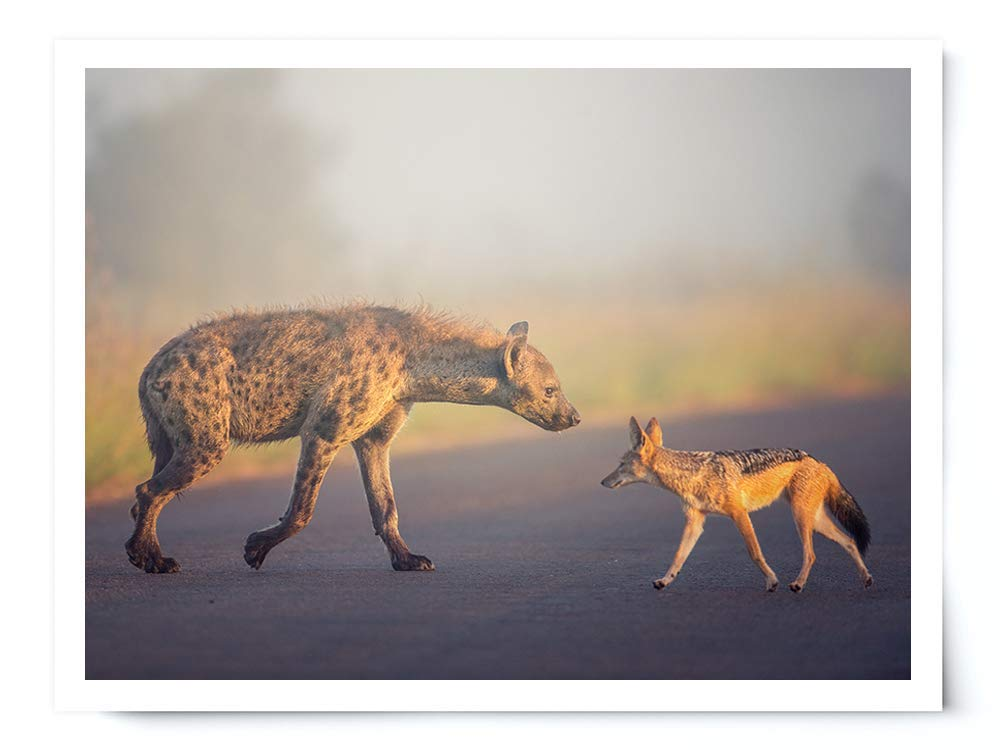 Sunset Hyena and Jackal - Wildlife Photograph Animal Picture Home Decor Wall Nature Print - Variety of Size Available