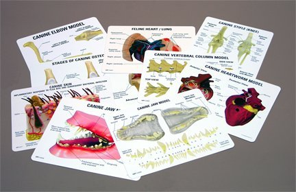 (Vet Tech Anatomy Professional Educational Key Card Set of 17)