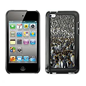 Print Motif Coque de protection Case Cover // V00001804 pingüino rey // Apple ipod Touch 4 4G 4th