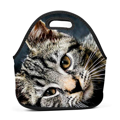 Aslgisy Handbags Tote Cute Kitty Cat Lunch Tote for Outdoor Travel Picnic,for Kids,Women,Adults,Girls and Teen]()