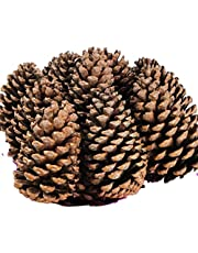 Naturals Education AP/2258/GPCAnthony Peters Quality Giant Pine Cones-Pack of 5-Approximately 15cm x 9cm, Wood