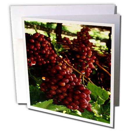 3dRose TDSwhite – Farm and Food - Food Flame Red Grapes Vineyard Healthy - 12 Greeting Cards with Envelopes (gc_285138_2) by 3dRose