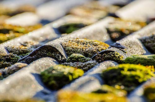 (Home Comforts Canvas Print Outdoor Surface Lichen Natural Soil Moss Soft Vivid Imagery Stretched Canvas 32 x)
