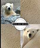 The Life Cycle of a Polar Bear, Robin Merritt, 1609731905