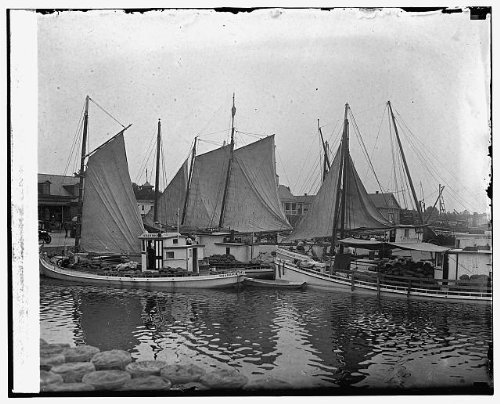 photo-1st-fleet-of-watermelons-from-nearby-farms8-11-25-1