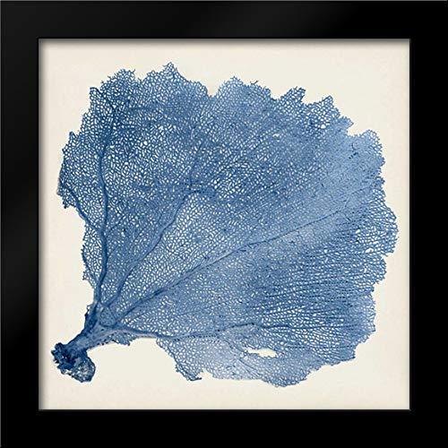 (Sea Fan V 15x15 Framed Art Print by Vision Studio)