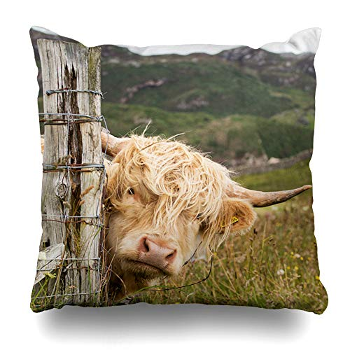 NOWCustom Throw Pillow Cover Brown Highland Scottish Highlander Scotland Wildlife Cow Big Red Africa Agriculture Cattle Cute Zippered Pillowcase Square Size 18 x 18 Inches Home Decor Pillow Case