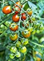 15 seeds Moby Grape Tomato Seed