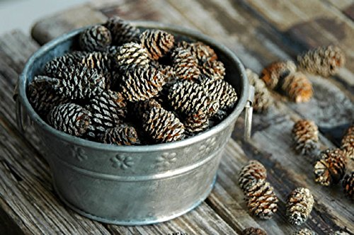 Frosted Mini Pine Cones - Perfect for Potpourri or crafting - American Made by MerdCraft