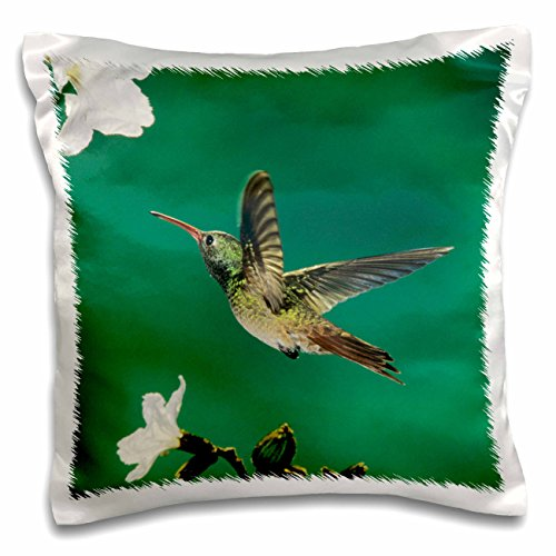 Danita Delimont - Birds - Buff-bellied Hummingbird Mexican Olive Tree Texas - NA02 RNU0365 - Rolf Nussbaumer - 16x16 inch Pillow Case (Texas Olive Tree)