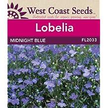 Lobelia Seeds - Midnight Blue (approx. 700 seeds)