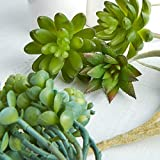Package of 5 Assorted Artificial Succulents for Floral Arranging, Garden Creation and Crafting