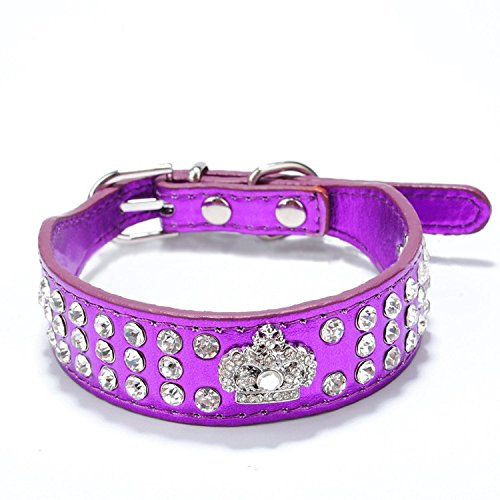 Small Dog Collars Amazon