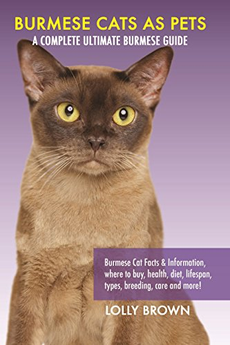 burmese cats as pets burmese cat facts information where to buy