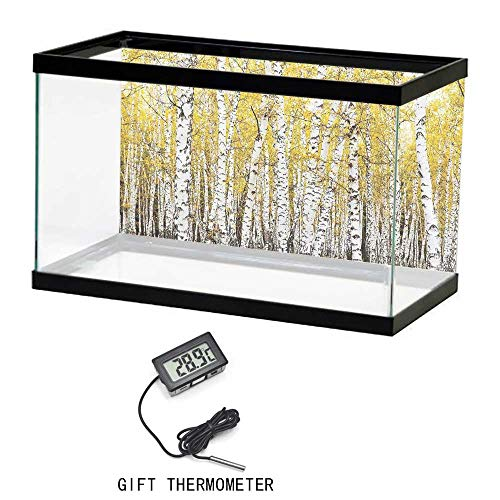 """Fish Tank Backdrop Static, Forest, Autumn Birch Forest Golden Leaves Woodland October Seasonal Nature Picture Print, Yellow Grey, 24""""x16"""" PVC Decoration Paper Cling Decals Sticker 61x41cm"""