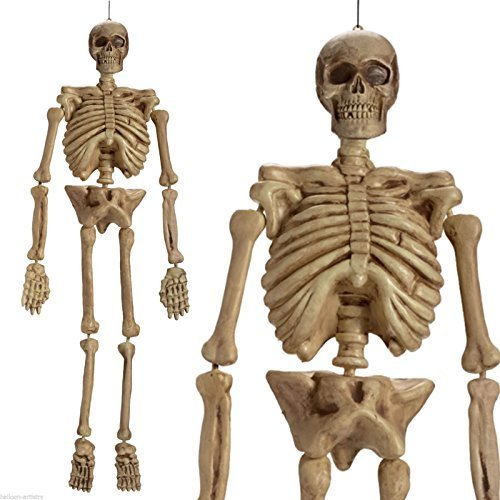 Realistic Hanging Skeleton 5ft Life Size Halloween Decoration Prop