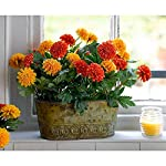 MARJON-FlowersArtificial-Orange-Red-Marigold-Flower-Arrangement-Pot-Potted-Centrepiece-Plant-Realistic-Lifelike