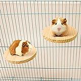 Squirrel Gerbil Chinchilla and Dwarf Hamster