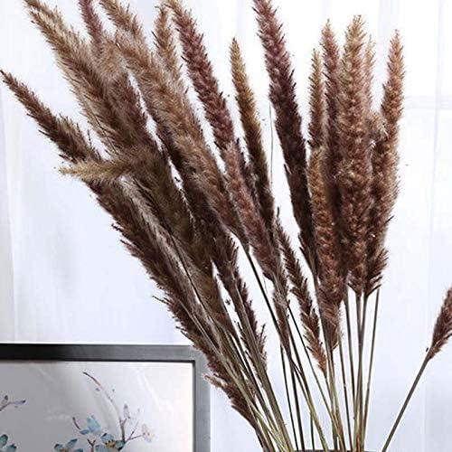 Bouquet de Fleurs de Mariage D/éCoration de Maison Fleur de Bricolage Accessoires de Photographie Correspondants Plante de Roseau Cikuso 60 Pi/èces Herbe S/éch/ée Naturelle de Pampa