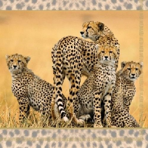 4 x Paper Napkins - Cheetah Family - Ideal for Decoupage / Napkin Art Ambiente