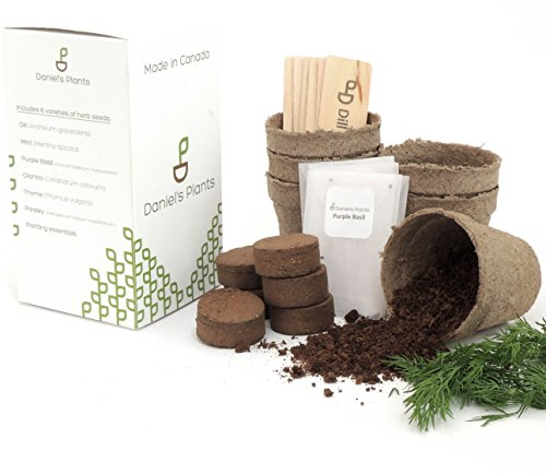 daniels-plants-6-herb-indoor-garden-starter-kit-purple-basil-mint-parsley-thyme-cilantro-dill-excell