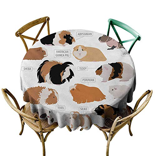 Round Tablecloth Vinyl Fitted Guinea Pig,Infographic Design Classification for Types of Rodent Breeds,Sand Brown Amber and Ginger D36,for Accent Table ()